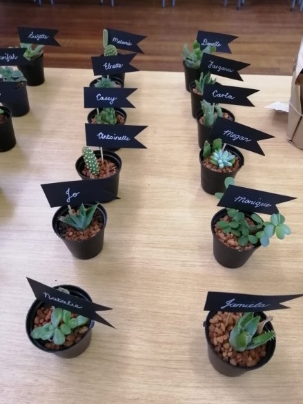Adopting a Growth Mindset to work during the pandemic…lessons from succulents2