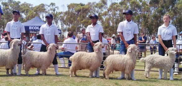 Calitzdorp learners display their skills at agriculture youth shows2