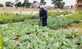 Irista Primary School garden produce a bountiful harvest