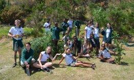 Camps Bay Primary School embarks on alien vegetation hack