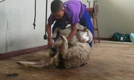 Precision farming in Western Cape Agricultural Schools